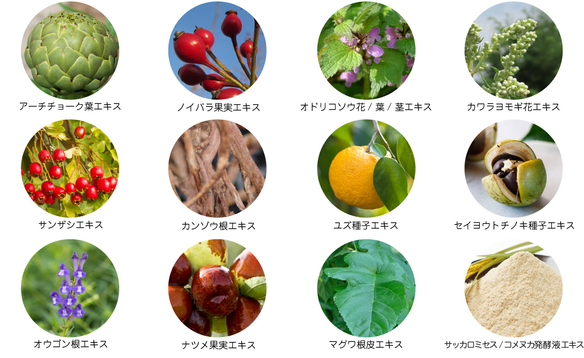 頭皮を健やかに保つ12種類の植物エキス